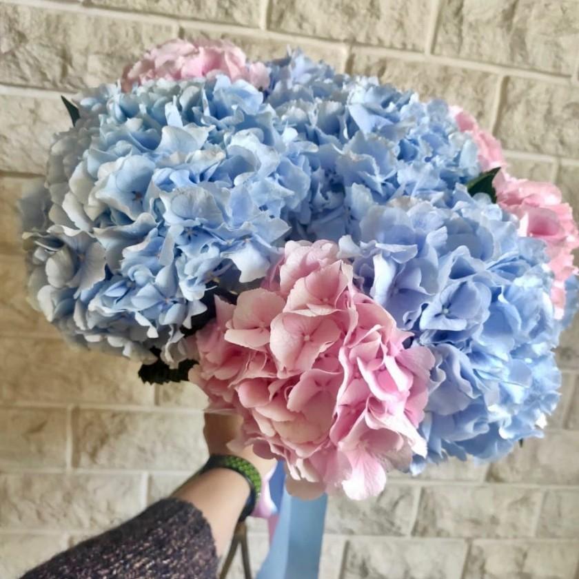 Голубые и Розовые гортензии
