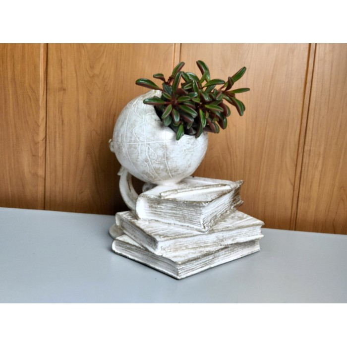 Горшечные растения суккуленты