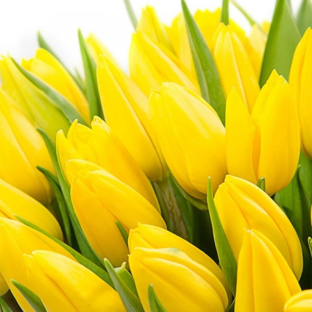 Надписью всегда, тюльпаны желтые картинки красивые